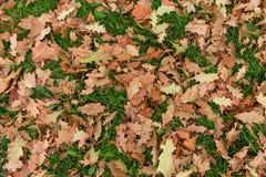 Textura da grama verde e das folhas de outono amarelas Imagem de Stock Royalty Free