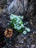Textura da madeira da árvore de casca fotos de stock