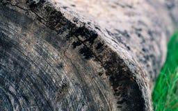 Textura da madeira fotografia de stock royalty free