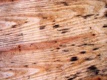 Textura da madeira Imagens de Stock