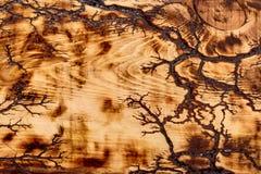 A textura da madeira clara com as listras decorativas escuras imagem de stock royalty free