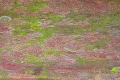 Textura da madeira compensada, Imagens de Stock Royalty Free
