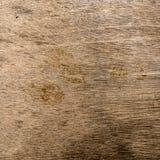 Textura da madeira compensada de Brown imagem de stock