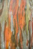Textura da madeira da árvore fotografia de stock