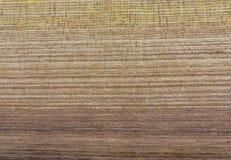 Textura da madeira da árvore de locustídeo foto de stock royalty free