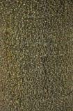 Textura da madeira da casca Fotografia de Stock Royalty Free