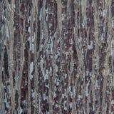 Textura da madeira da casca Fotos de Stock