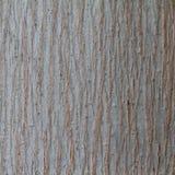 Textura da madeira da casca Foto de Stock Royalty Free