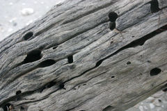 Textura da madeira da tração Fotografia de Stock