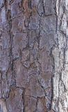 Textura da madeira de Brown Foto de Stock