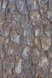 Textura da madeira de Brown Imagens de Stock