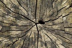 Textura da madeira de Cutted Imagem de Stock Royalty Free