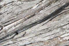 Textura da madeira de um zimbro velho Fotos de Stock Royalty Free