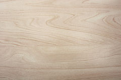 Textura da madeira de vidoeiro Imagens de Stock Royalty Free