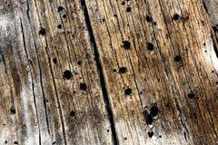 Textura da madeira do besouro Foto de Stock