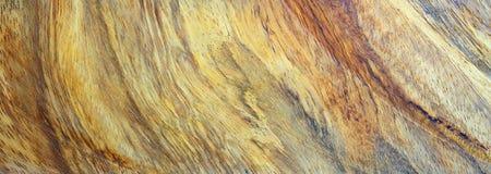 Textura da madeira do corte Imagens de Stock