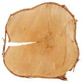 Textura da madeira do corte da cruz do tronco do vidoeiro fotografia de stock royalty free