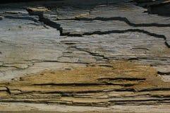 Textura da madeira lançada à costa Fotos de Stock
