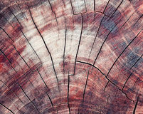 A textura da madeira no corte Fotografia de Stock Royalty Free