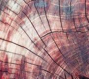 A textura da madeira no corte Fotos de Stock