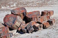 Textura da madeira Petrified Foto de Stock Royalty Free