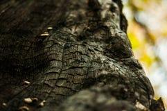 Textura da madeira queimada Fim acima rachaduras Parte queimada da madeira no foco seletivo da floresta Foto da natureza fotografia de stock royalty free