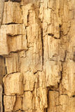 Textura da madeira resistida e rachada Imagem de Stock
