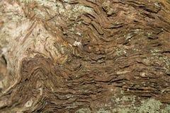 Textura da madeira velha Imagem de Stock Royalty Free