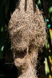 Textura da natureza da casa do ninho do ` s do pássaro Foto de Stock