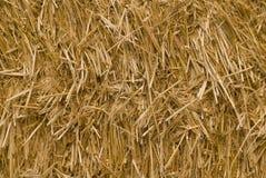 Textura da palha Fotos de Stock