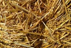Textura da palha como um fundo da natureza do outono foto de stock