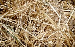 Textura da palha, fundo, trabalho da exploração agrícola fotos de stock