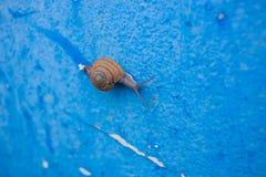 Textura da parede azul suja velha fotografia de stock