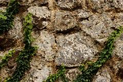 Textura da parede da rocha com verde Imagem de Stock Royalty Free
