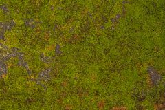 A textura da parede de pedra velha cobriu o musgo verde no forte Rotterdam, Makassar - Indonésia fotografia de stock royalty free