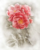 Textura da parede do Grunge com fundo floral Foto de Stock
