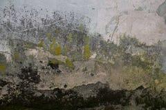 Textura da parede musgoso do líquene do emplastro velho Fotografia de Stock Royalty Free