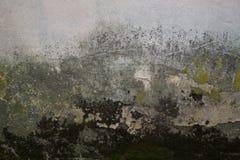Textura da parede musgoso do líquene do emplastro velho Foto de Stock