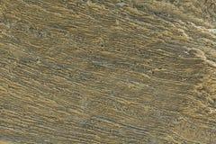 Textura da pedra-costa Foto de Stock