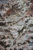 A textura da pedra marrom escura molhada com musgo Close-up da rocha imagens de stock