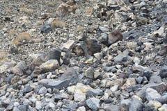 A textura da pedra vulcânica da ilha de Santorini Foto de Stock