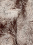 Textura da pele Foto de Stock Royalty Free