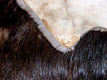 Textura da pele Fotografia de Stock