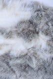 Textura da pele cinzenta Foto de Stock Royalty Free