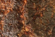 Textura da pele da árvore dos enigmas de macaco Fotografia de Stock