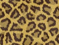 Textura da pele da chita Imagem de Stock