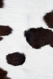 Textura da pele da vaca Imagens de Stock Royalty Free