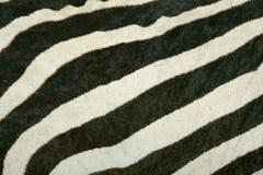 Textura da pele da zebra de montanha Fotos de Stock Royalty Free