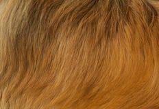 Textura da pele do cão Foto de Stock