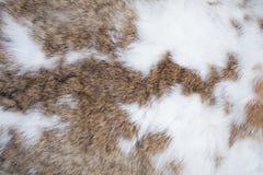 Textura da pele do coelho Imagem de Stock Royalty Free